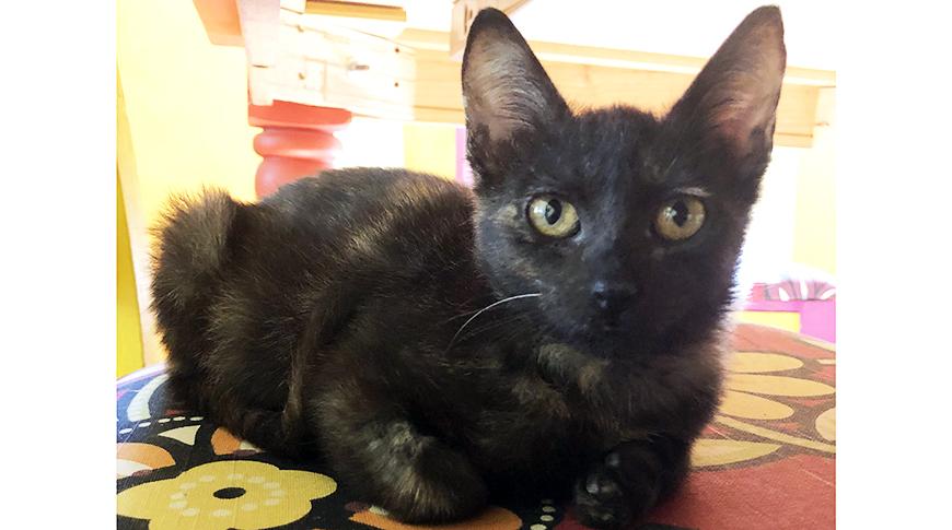 federica kitten2