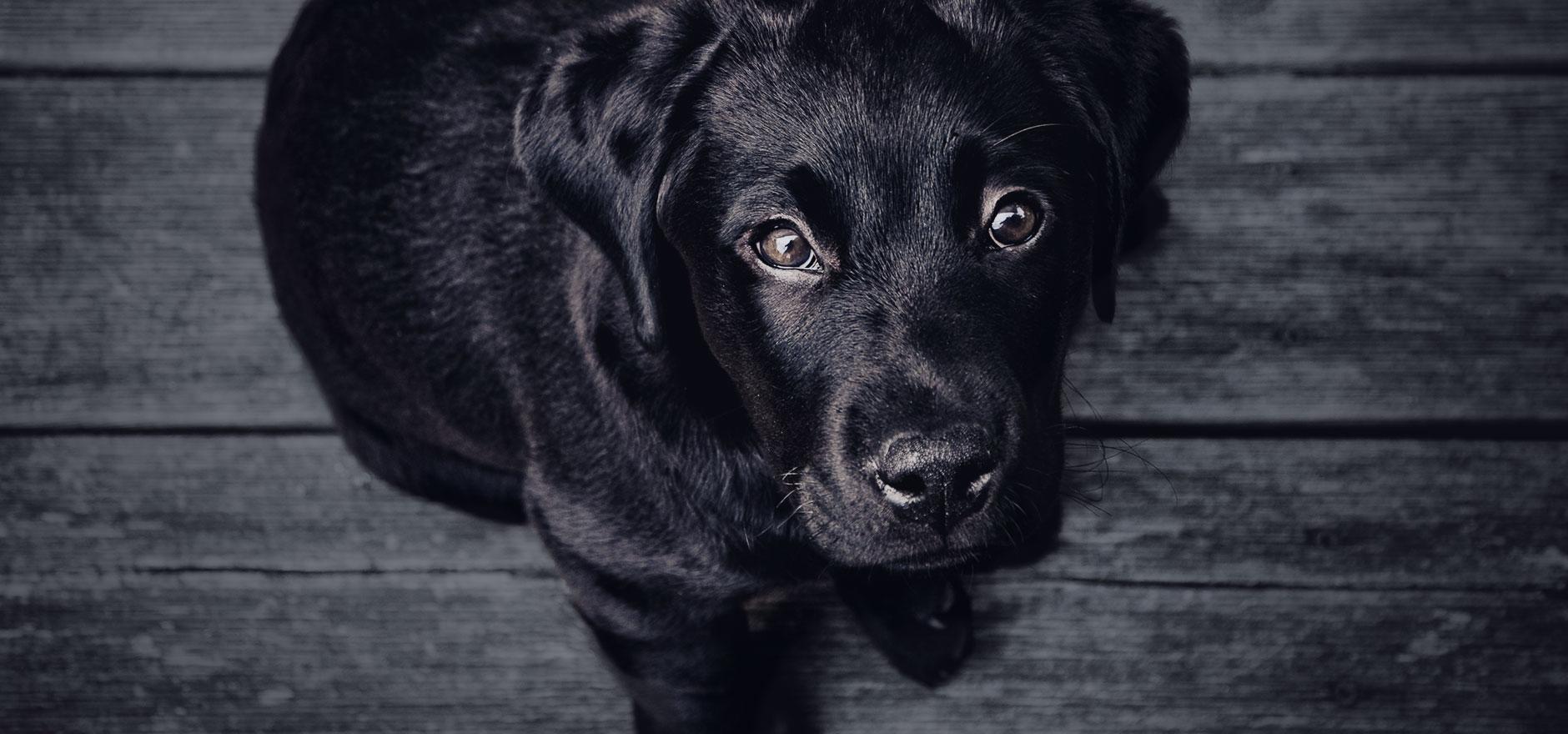 home_animals_slide1.jpg